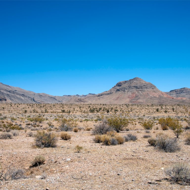 Lawyer Invests $ 300 Million to Build Crypto City in the Nevada Desert