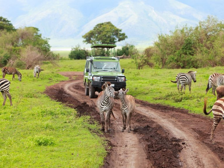 Riddell Travel Will Help You Arrange Your African Tour With BCH